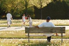 Tarde no parque (o ar está cheio de sementes de flutuação do dente-de-leão) foto de stock royalty free