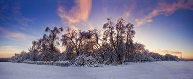 Tarde sobre bosque nevoso Imágenes de archivo libres de regalías