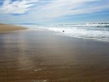 Tarde soleada en la playa con los pájaros Foto de archivo libre de regalías