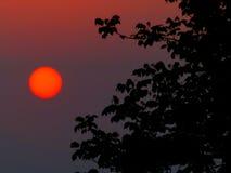 Tarde Sun imagen de archivo libre de regalías