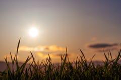 Tarde Sun sobre a grama Imagens de Stock Royalty Free