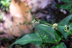 Tarde un momento de la abeja Fotografía de archivo libre de regalías