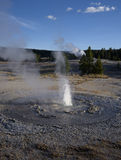Tardy Geyser Stock Images