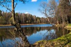 Tarelochkin池塘在森林公园Saltykovsky,莫斯科地区 免版税库存照片
