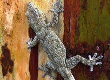 Tarentola-delalandii, großer zitronengelber Gecko stockbilder