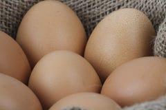 target278_1_ łamający kulinarnych obrazu jajek nietknięty postęp niektóre taca obraz royalty free
