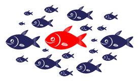 Target audience red fish concept. Target audience concept with red fish and blue fishes Stock Photos