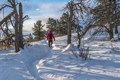 target1532_0_ Colorado zima Obraz Stock