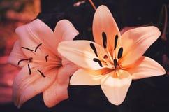 target548_1_ kwiatu odosobniony lelui ścieżki biel fotografia royalty free