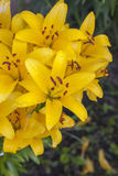 target548_1_ kwiatu odosobniony lelui ścieżki biel Zdjęcia Stock