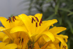target548_1_ kwiatu odosobniony lelui ścieżki biel Obrazy Stock
