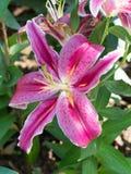 target548_1_ kwiatu odosobniony lelui ścieżki biel Zdjęcia Royalty Free