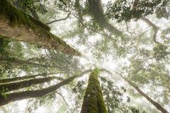 TARGET1081_0_ las w lesie Zdjęcie Stock
