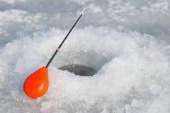 target142_1_ lodowych właśnie kłamstw wychwytany zima zander Zdjęcia Stock