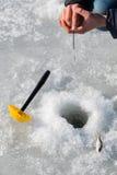 target142_1_ lodowych właśnie kłamstw wychwytany zima zander Obraz Stock
