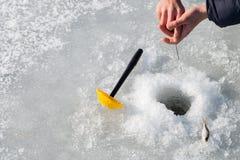 target142_1_ lodowych właśnie kłamstw wychwytany zima zander Zdjęcie Stock
