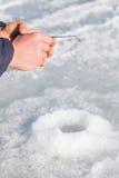 target142_1_ lodowych właśnie kłamstw wychwytany zima zander Obrazy Royalty Free