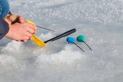 target142_1_ lodowych właśnie kłamstw wychwytany zima zander Zdjęcia Royalty Free