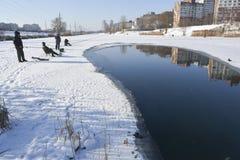 target142_1_ lodowych właśnie kłamstw wychwytany zima zander Fotografia Royalty Free