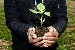 target967_1_ mężczyzna rośliny zieleni ręki młody Symbol wiosna i ecol Obraz Royalty Free