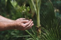 target967_1_ mężczyzna rośliny zieleni ręki młody Symbol wiosna i ekologii pojęcie Obrazy Stock