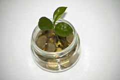 target2195_1_ odizolowywający słoju pieniądze ścieżki biel Rośliny dorośnięcie W Savings monetach - inwestyci I interesu pojęcie Zdjęcie Stock