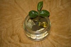 target2195_1_ odizolowywający słoju pieniądze ścieżki biel Rośliny dorośnięcie W Savings monetach - inwestyci I interesu pojęcie Fotografia Stock