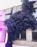 target95_1_ stary drzewo obrazy royalty free