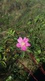 target900_0_ tło kwiat sia słonecznika Obrazy Royalty Free