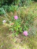 target900_0_ tło kwiat sia słonecznika obrazy stock