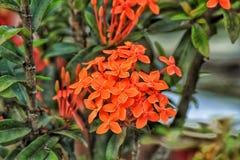 target900_0_ t?o kwiat sia s?onecznika zdjęcia royalty free