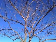 target2164_0_ tworzącego różnego ujawnień spadek ulistnienia hdr wizerunek trzy Fotografia Stock