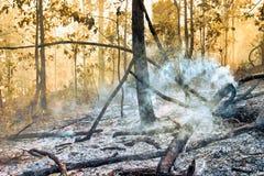 target3168_1_ zniszczony lasowy tropikalny obraz royalty free