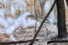 target3168_1_ zniszczony lasowy tropikalny obrazy royalty free