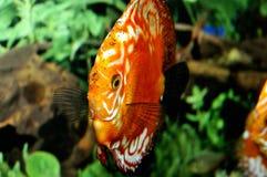 target1074_0_ rybi szczęśliwi goście Zdjęcia Stock