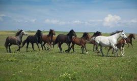 target1202_1_ niebo trawa błękitny konie Obraz Stock
