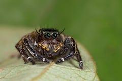 target1735_1_ odpoczynkowy pająk zdjęcia royalty free