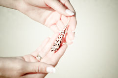 TARGET186_1_ seashell Zdjęcia Royalty Free