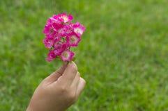 TARGET227_1_ biały kwiatu dziewczyny ręka Obrazy Royalty Free