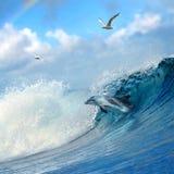 target2422_1_ kędzierzawego delfinu skaczący ocean skaczący macha Obrazy Royalty Free