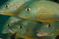 target3067_0_ lampas błękitny chrząknięcia Zdjęcia Royalty Free