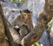 target342_1_ małpiego arbuza Obrazy Stock