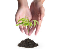 TARGET373_1_ zielonej rośliny Zdjęcie Stock