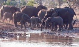target397_0_ słonia stada woda Zdjęcie Stock