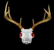 target4374_0_ czerwoną czaszkę jeleni oczy Zdjęcie Stock