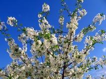 target485_0_ drzewo obraz royalty free