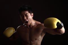 TARGET585_0_ i target586_0_ azjatycki bokser Obraz Royalty Free