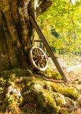 TARGET591_0_ na drzewie stary cartwheel obrazy stock