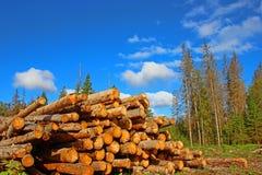 TARGET631_1_ na Rosja Zdjęcie Stock