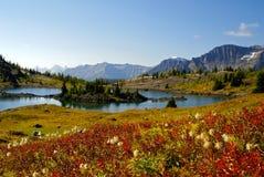 TARGET648_0_ ślad światło słoneczne łąki, Banff Fotografia Stock